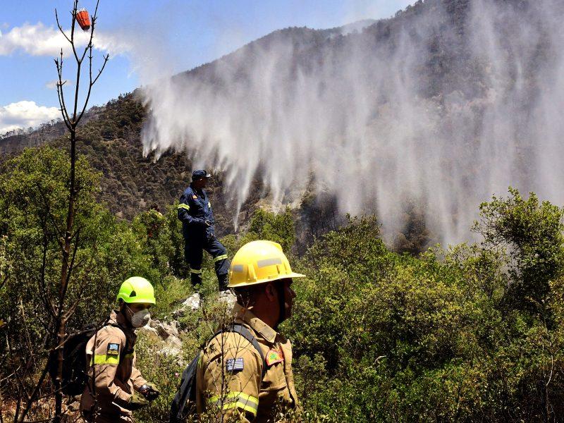 Graikijai kovojant su didžiuliu miškų gaisru, baiminamasi ekologinės nelaimės