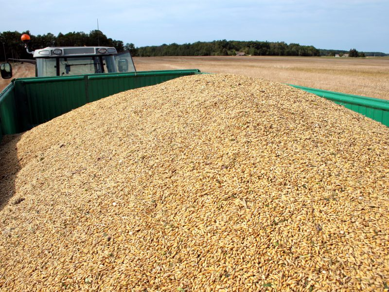 Spalį Lietuva eksportavo daugiau grūdų