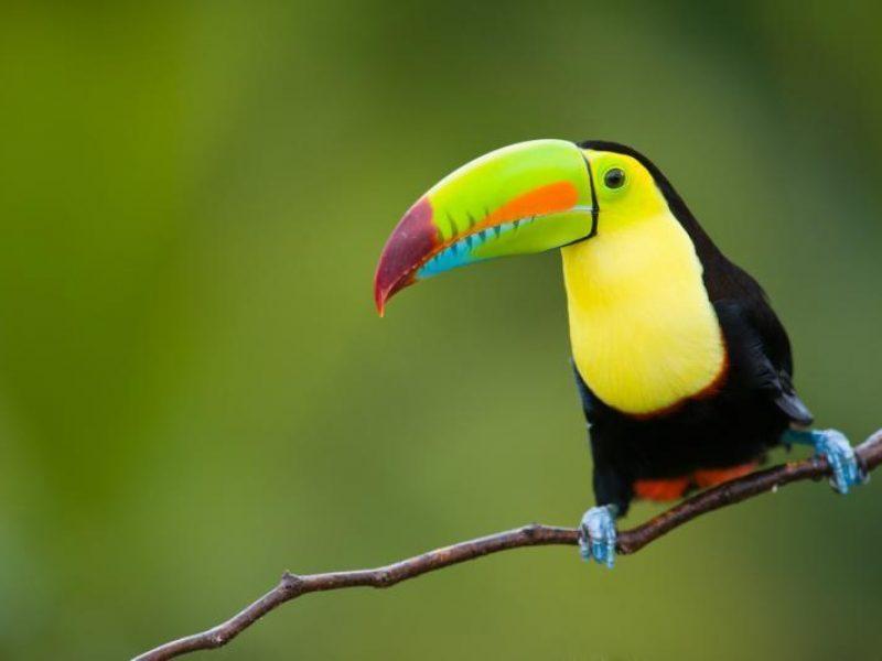 Tyrimas: mažėja saugomų tropinių miškų biologinė įvairovė