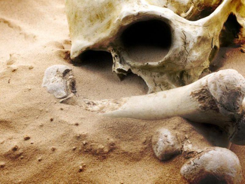Vilniaus rajone rasta žmogaus kaukolė ir kaulų dalys