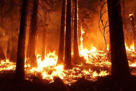 Karščio alinamoje Graikijoje siautėja miškų gaisrai
