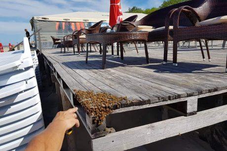 Klaipėdos paplūdimiuose – bičių ataka